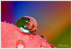 The dew over the rainbow by diensilver