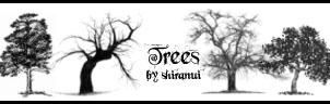 Trees by Shiranui