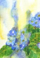 Watercolor: Hydrangea III by muttiy