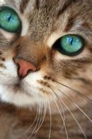 nosey little cat by eSka89