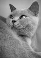 Portrait of a Cat by bnd-lawrence