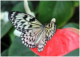 Butterfly 2 by Claudia008