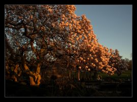 Her Magnificence Magnolia 3 by Isyala