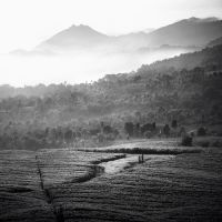 Tea plantation by Hengki24