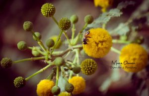 Bees and Trees by zooz898