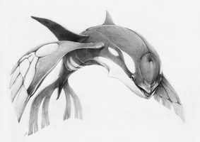 ALPHA KYOGRE by Imaglelio