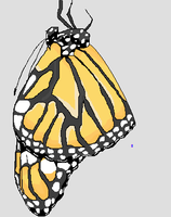 Monarch Butterfly by AluminumSunset