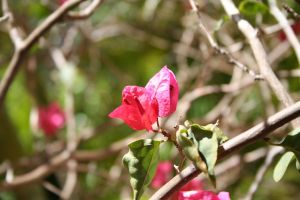 Anguillan Bloom by tammyins