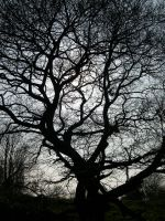 Branches 1 by stevesm-stock