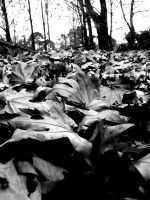 Autumn Leaves in Black White by Violinscry