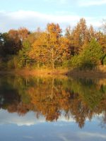 Fall Tree at Pond by Wisteareia