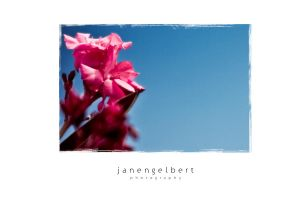 flowers and blue sky 2 by jan2710
