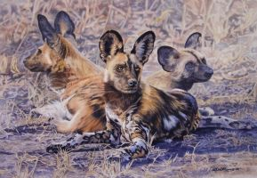 African Wild Dogs by WillemSvdMerwe