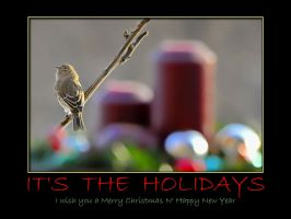 Gold Finch Xmas card by MichelLalonde