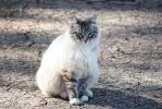 Our Outdoor Cat: Georgie by ShadowKnight508