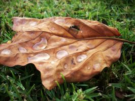 Leaf 2 by VirginiaRoundy