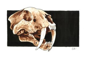 Saber tooth tiger watercolor by Sabre-Art