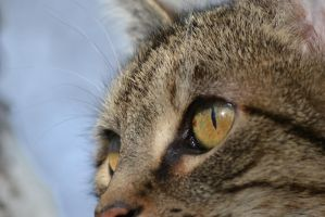 Cat - 7 by Silver-Stock-Images