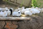 artisanal sheep by Isabeeel