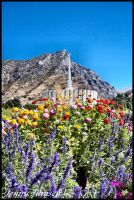 Provo Temple + Flowers 4 by JLFEclipse