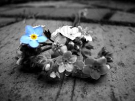 Forget-me-not... by ombre-de-lune