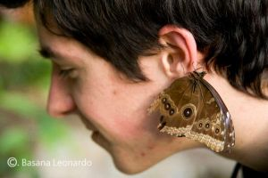 Butterfly_BL_5_my friend by Leox90