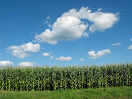 Gorgeous Country Sky and Crops by laners-08