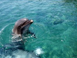 Smiling dolphin by YuliaAnnaAlexz