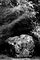 Galloway Forest: Rock by Coigach