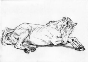 Horse sketch by Adniv