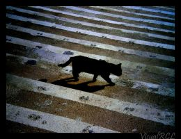 Lonely Cat by negrorcl