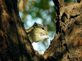 portrait with photo frame of squirrel by kumarvijay1708