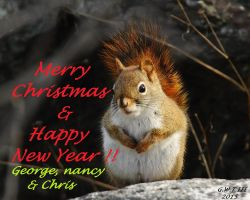 My 2015 Christmas E-Card by natureguy