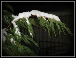 Snow On Tree4 by roxyms