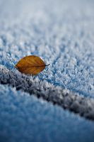 Frost 2 by crawen
