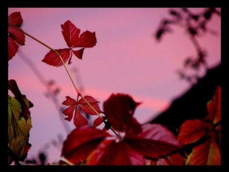 Autumn Leaves by buzau