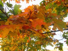 Folding maple leafs by Juhis96