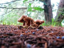 Just some really cool shrooms by Heidipickels