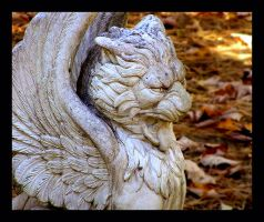 Griffin by KWilliamsPhoto