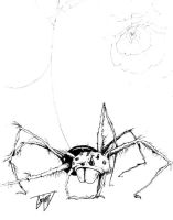 Hairy Spider by driver16