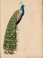 Indian Peafowl by Abiogenisis