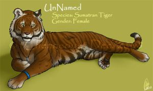New Char - Sumatran Tiger by chenneoue