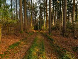 Path Through November Forest by Burtn