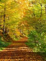 my way to the end by Dieffi