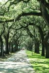 Savannah Path by ceciliay