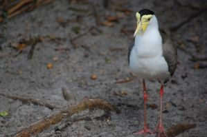 yellow billed bird by JBlue2389