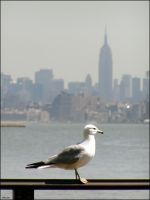 A Seagull in New York by penelopew