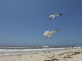 Seagulls Flying Beach by RestLeSsD