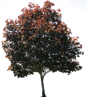 Tree PNG 01 by Thy-Darkest-Hour