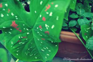 Green leaf. by kathyxsmile